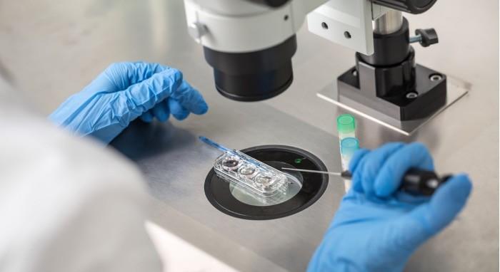 Oplodnja jajne ćelije i spermatozoida u laboratoriji.